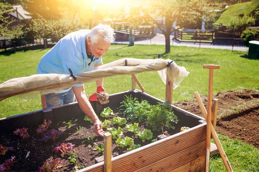 Senior im sonnigen Garten an einem Hochbeet